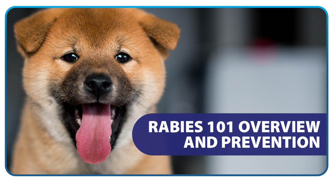Rabies 101: Overview and Prevention