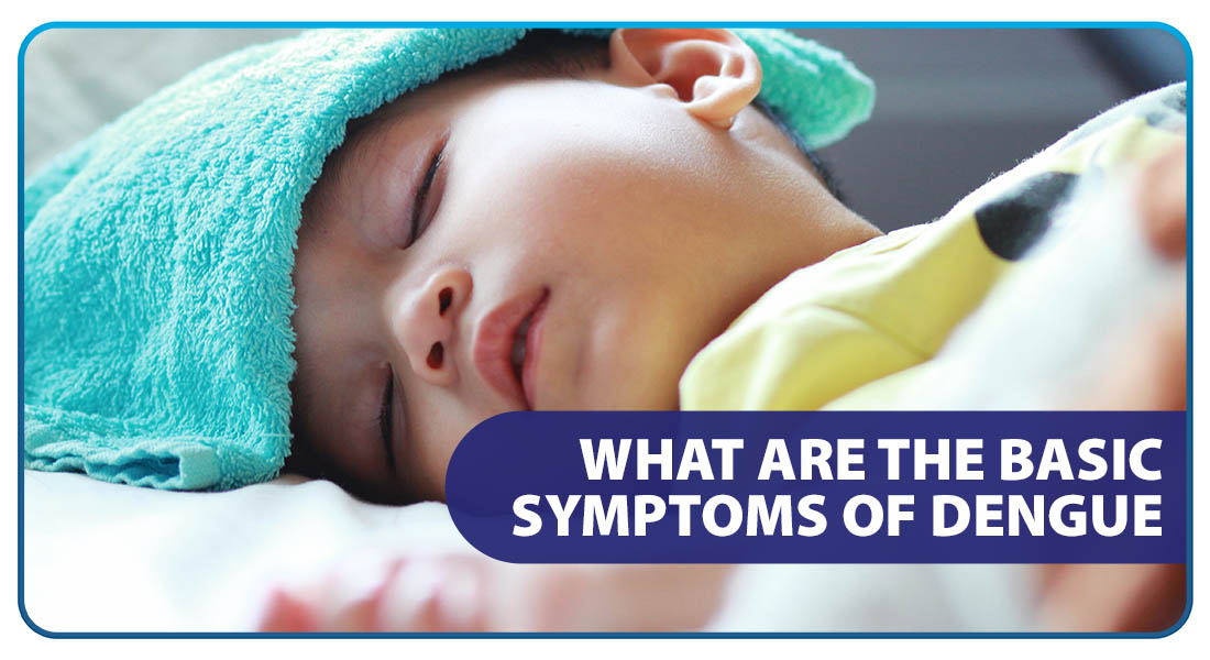 What are the Basic Symptoms of Dengue